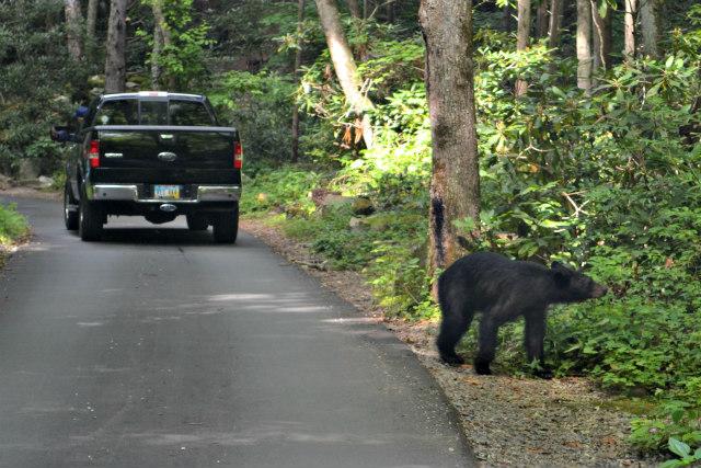 Roaring Fork Lazy Bear